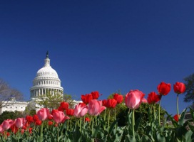 faithful-citizenship-capitol-tulips-montage